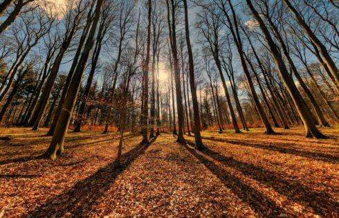 Eine geheime Oase – Der Bruchsaler Waldtempel